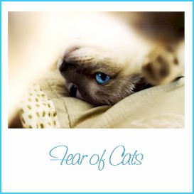 how to overcome fear of cats